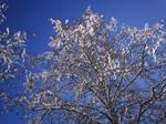 Winter Trees-11