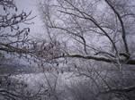 Winter Trees-17 by The-Warlock-King
