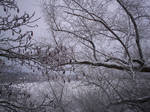 Winter Trees-17