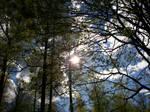 Spring Trees-7