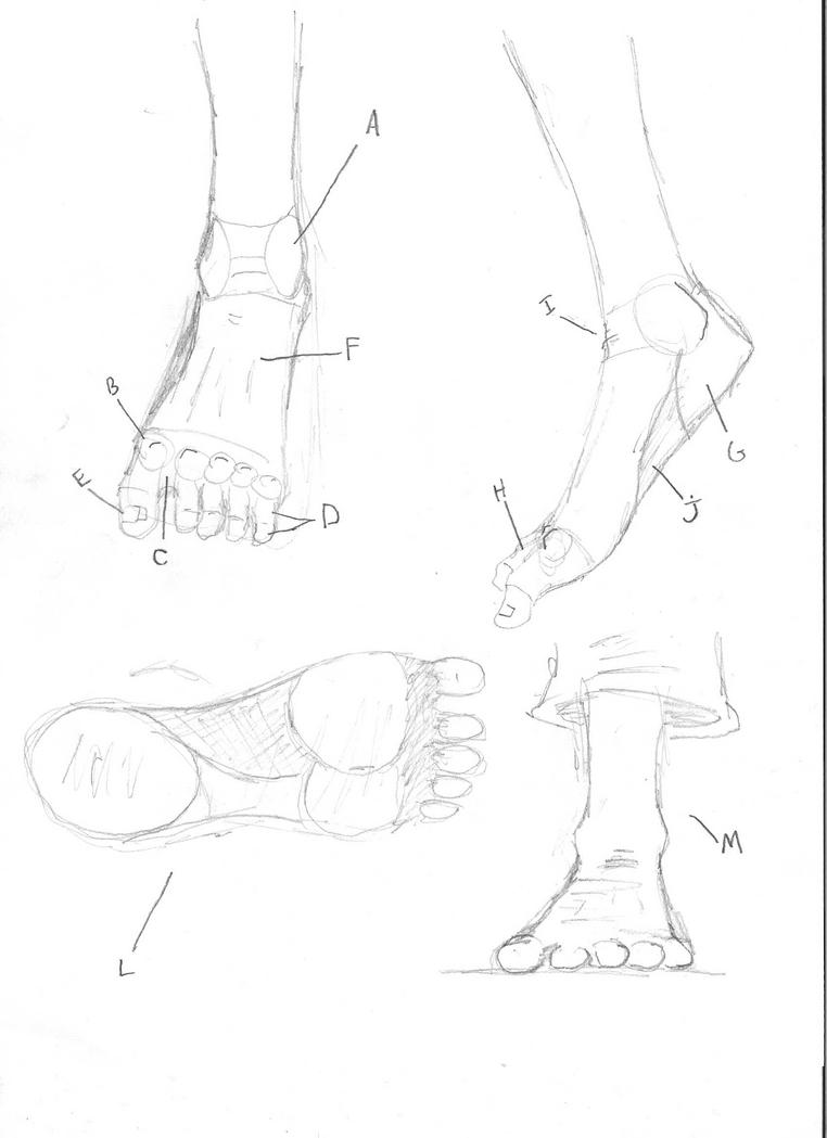 Drawing Tutorial: Feet by VoipComics