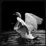 Water Ritual by Draken413o