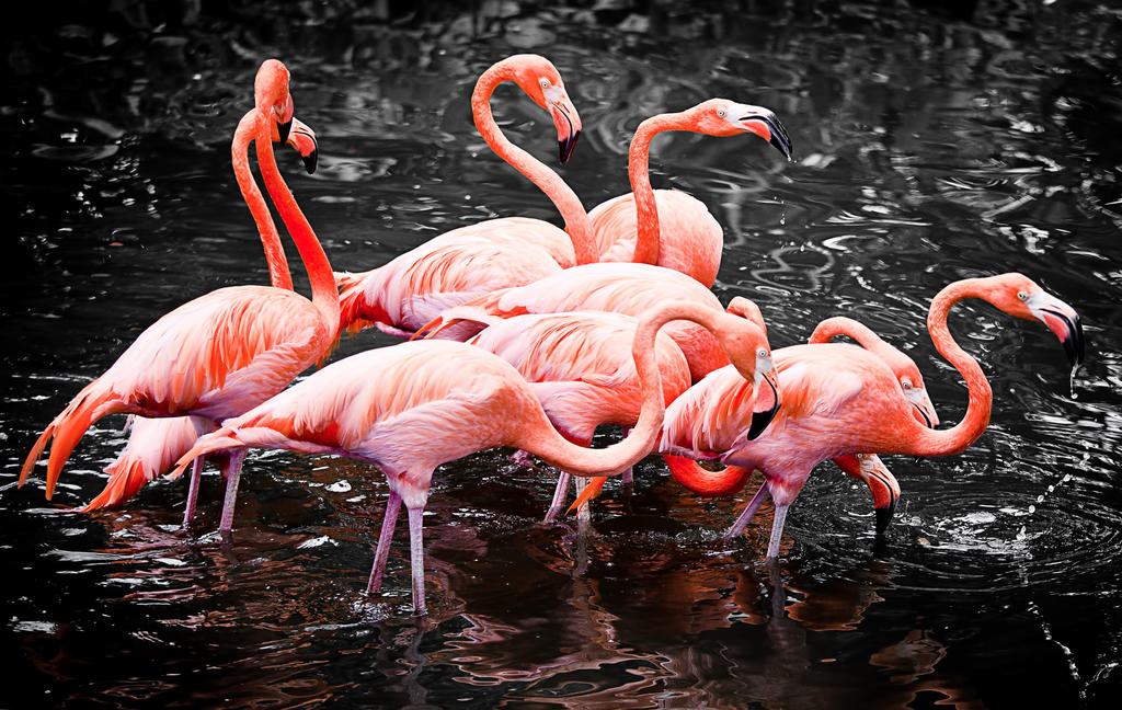 Flamingo Pack by Draken413o