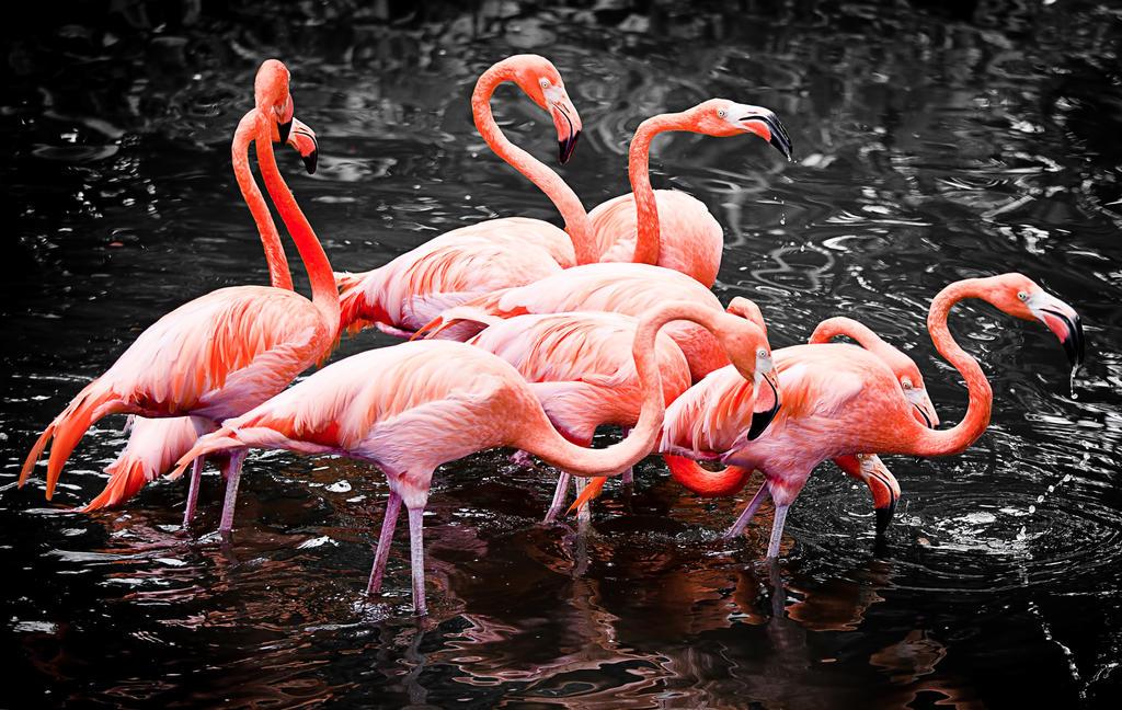 Flamingo Pack by Draken413o