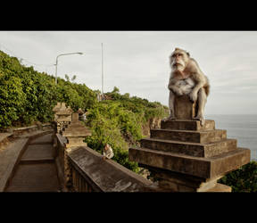 Fat Monkeys of Uluwatu by Draken413o