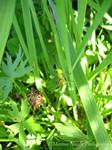 One little grasshopper