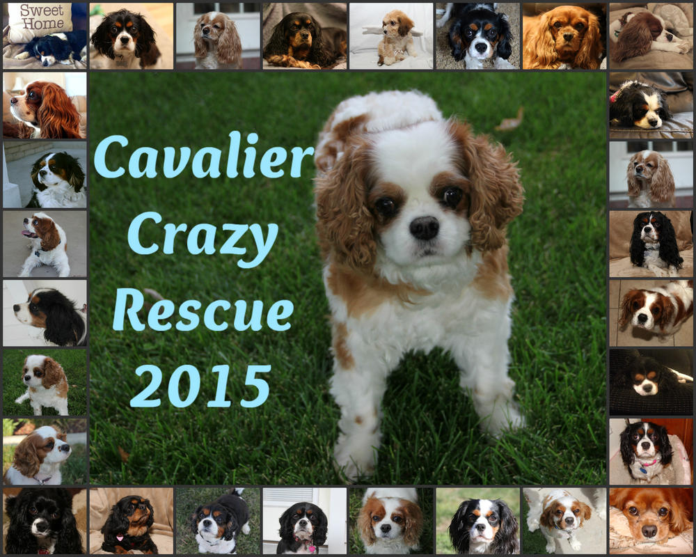 Cavalier Crazy Rescue Calendar by Gryffingirl77