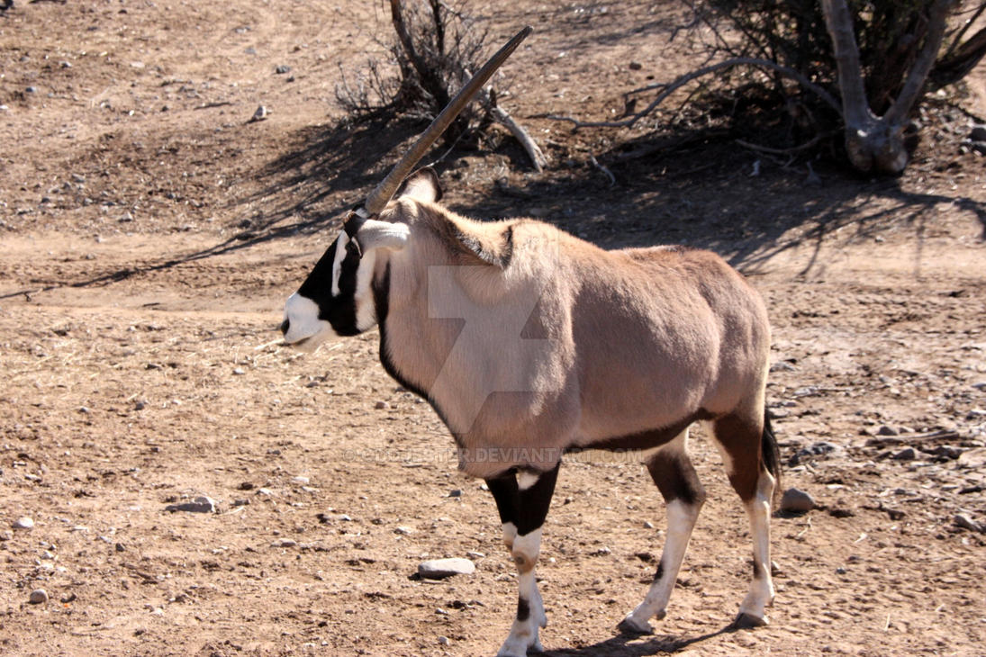 Oryx by oddjester