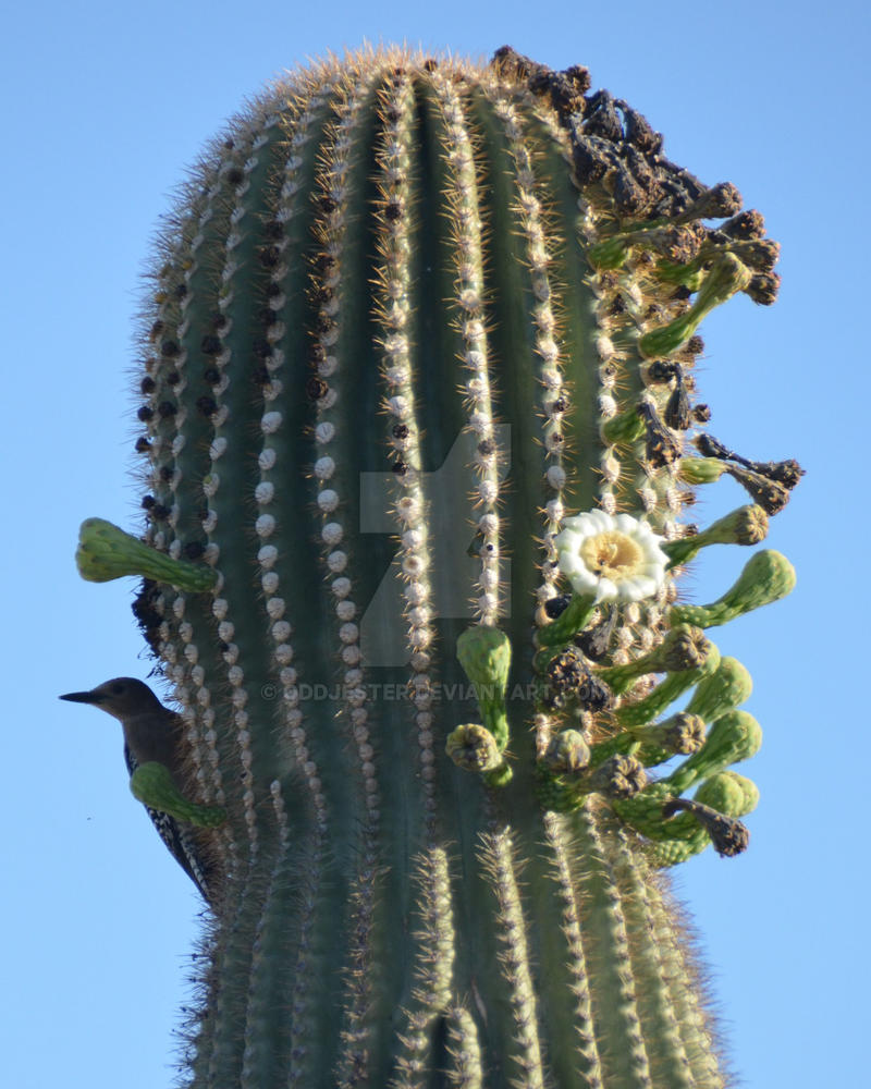Cactus Wren: Got him!! by oddjester