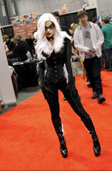 Black Cat at Comic Con