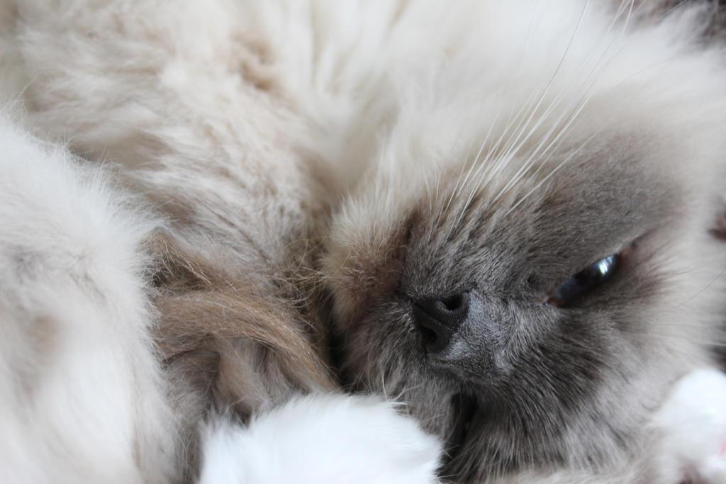 Sleepy Kitty by zombiemarshmellow