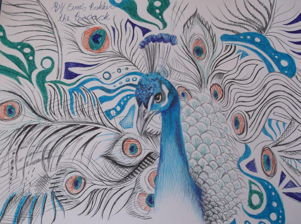The peacock (WIP pen drawing) by Dustywallpaper on DeviantArt