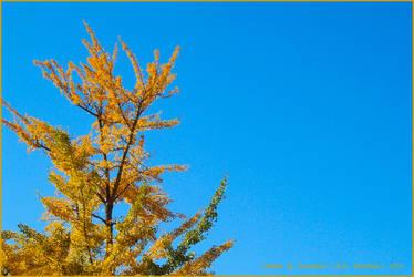 Golden by Synnabun