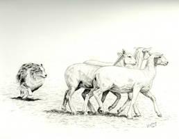 Aussie Herding Sheep by celestriastars