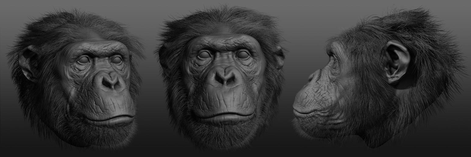 Chimp Sculpt by RedHeretic