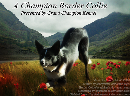 Border Collie Manip for Diamond Dawg by fierfairy42