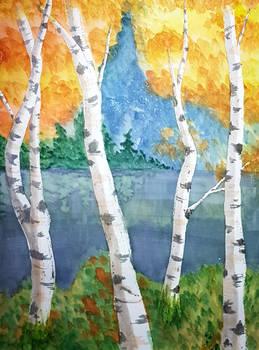 Watercolour Birches