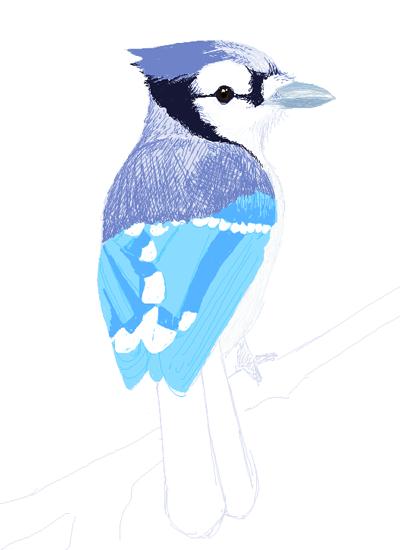 MSPaint Blue Jay by GlowingMember