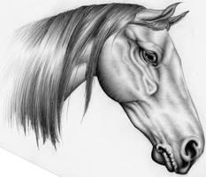 horse by herzeleid11