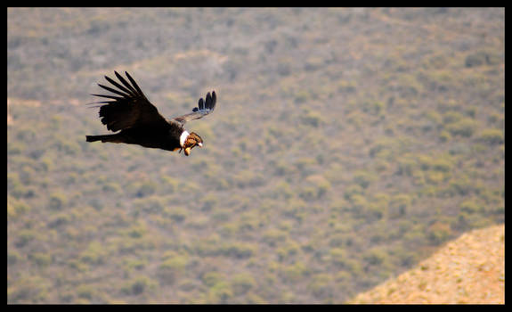 Flying by me side