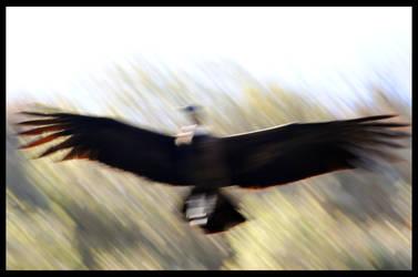 Fly slower