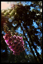 Shining Flower