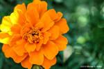 the synthetic awakening - The Green n' Orange