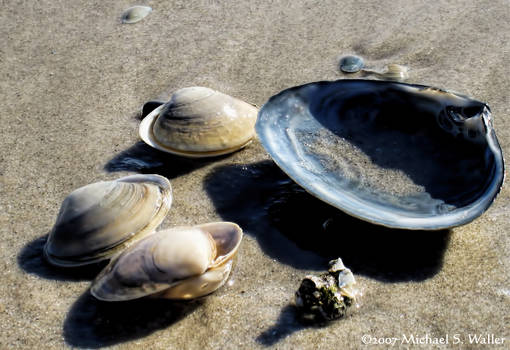 the synthetic awakening - Sea Shells