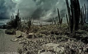 the synthetic awakening - Cacti by thsyntheticawakening
