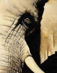 Elephant by dramenon