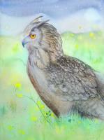 Owl sketch by kimberly80