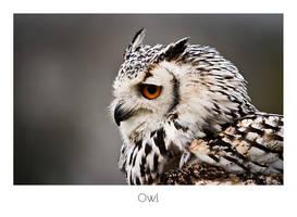 Owl by AlexMarshall