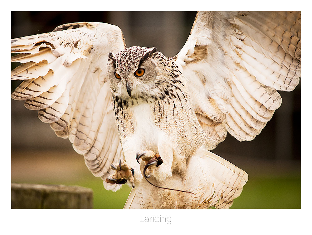 Landing by AlexMarshall