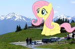 Fluttershy, More Beauty than the Eye Can Behold