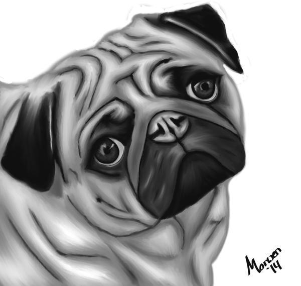 Pug by UchihaMorwen