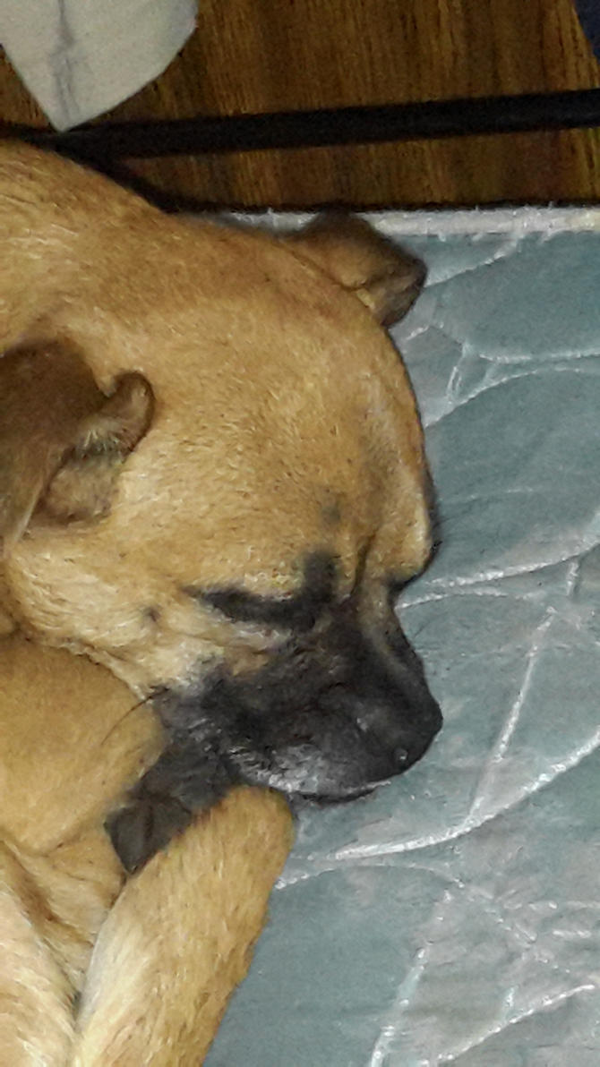 My dog peanut by brolytheawsome