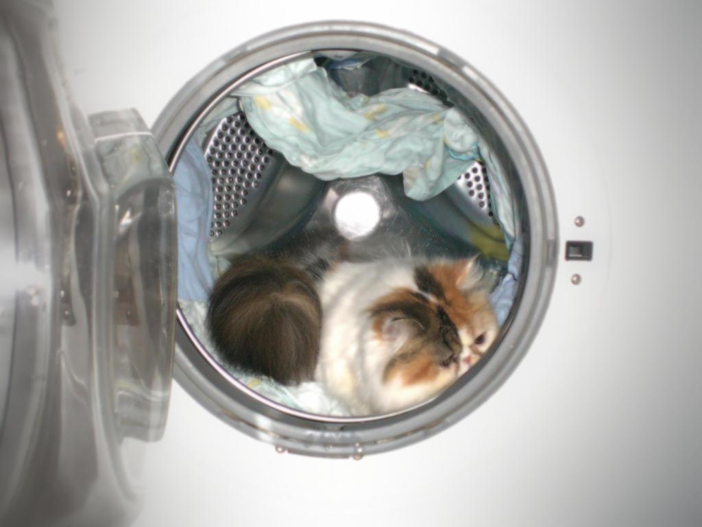 cat in washer machine