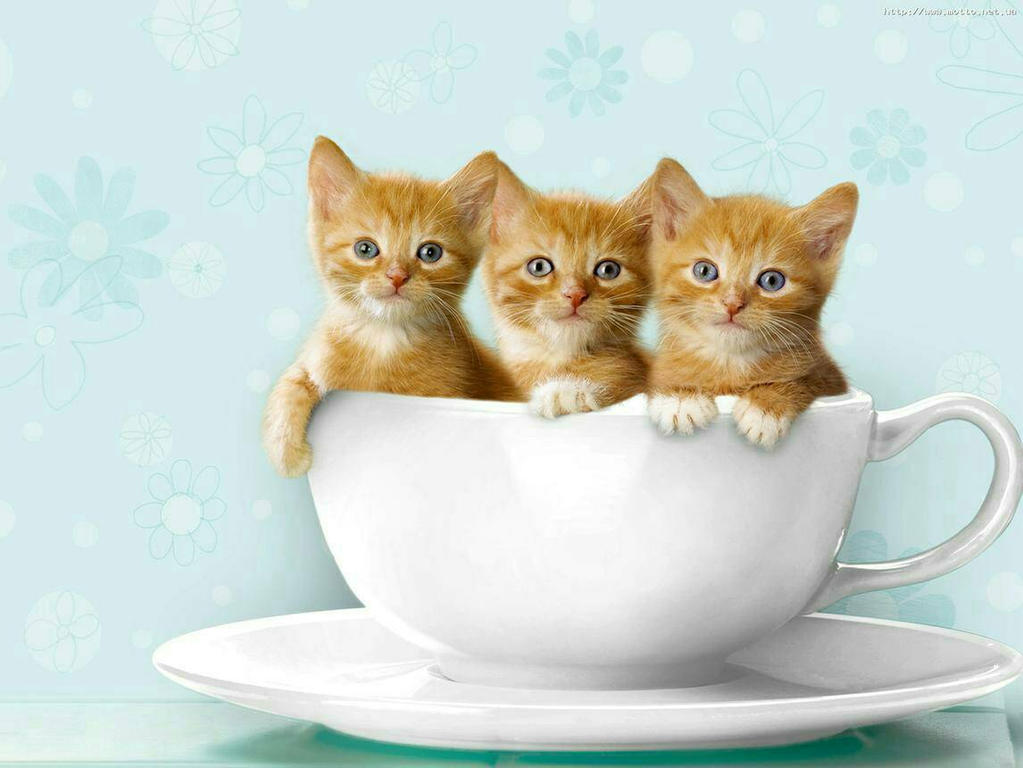 kittens in a cup  by dropchrissy