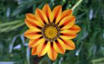 Pretty flower 6 by dropchrissy