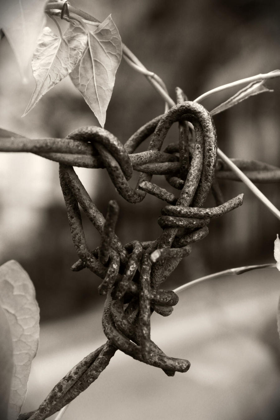 Barbed Wire Heart - Reprise by Januine