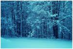 Winter Dominance