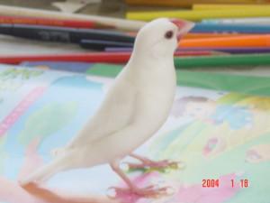 reanmeih's Profile Picture