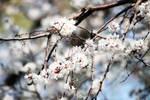 Spring in Shenyang