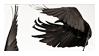 crow stamp by black--crown