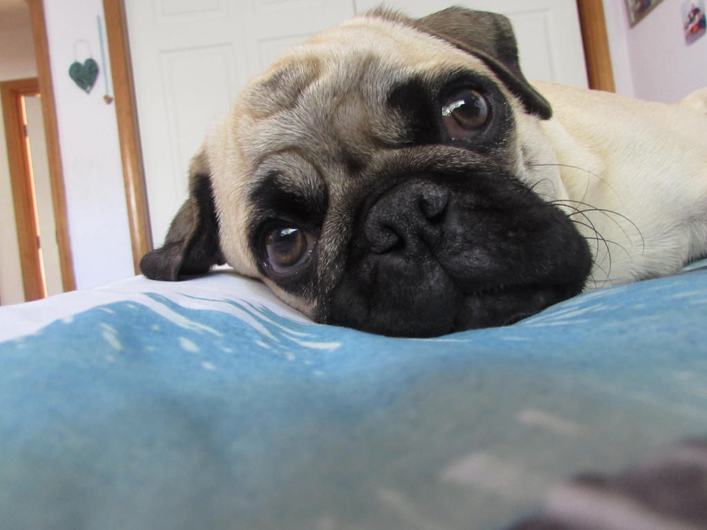 Cute Puppy Face 3 by EverLastingLuv on DeviantArt