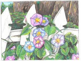 Morning Glories for Gloria by Black-Feather