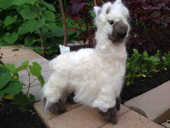 Needle Felted Project:   Alpaca by Black-Feather