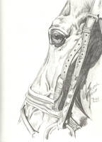 Bridal Path--Equine Study by Black-Feather