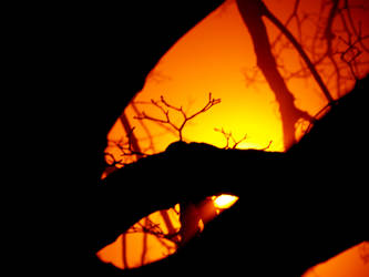 orange light by AylaBlack