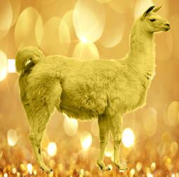Golden Llama by 18Blueberrys
